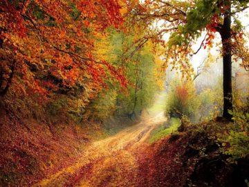 イタリアの秋の味覚の画像